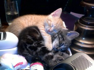 two kitties cuddling